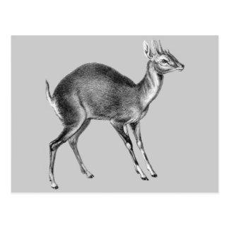 Haeckel Four Horned Deer Postcard