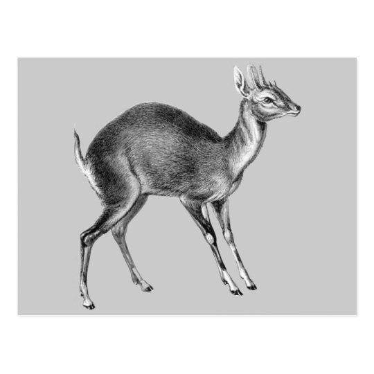 Haeckel Four Horned Deer Postcard