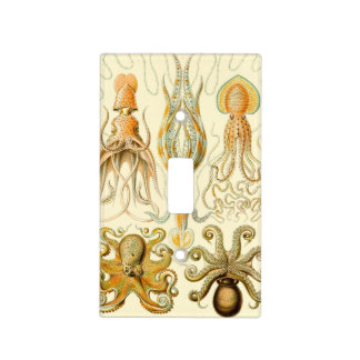 Haeckel Gamochonia Light Switch Cover