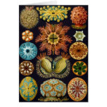 Haeckel Greeting Card