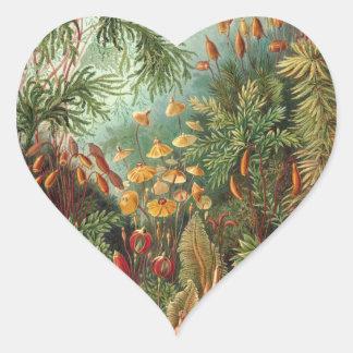 Haeckel Heart Sticker