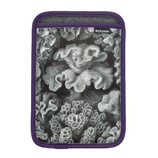 Haeckel Hexacoralla iPad Mini Sleeves