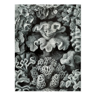 Haeckel Hexacoralla Postcard
