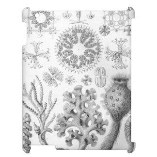 Haeckel Hexactinellae iPad Covers