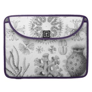 Haeckel Hexactinellae Sleeve For MacBook Pro