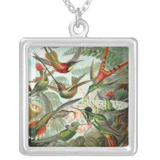 Haeckel Humminbird Necklace
