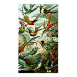 Haeckel Hummingbirds Business Cards