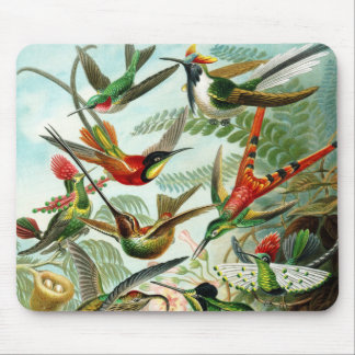 Haeckel Hummingbirds Mouse Pad