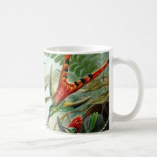 Haeckel Hummingbirds Coffee Mugs