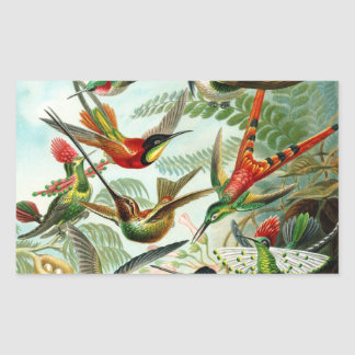 Haeckel Hummingbirds Rectangular Sticker
