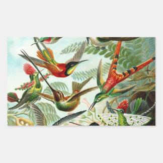 Haeckel Hummingbirds Rectangular Stickers