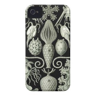 Haeckel iPhone Case - Amphoridae