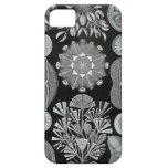 Haeckel iPhone Case - Diatomea iPhone 5 Cover