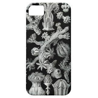 Haeckel iPhone Case - Gorgonida iPhone 5 Case