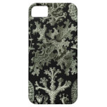 Haeckel iPhone Case - Lichenes iPhone 5 Cases