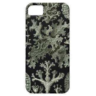 Haeckel iPhone Case - Lichenes iPhone 5 Cover