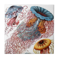 Haeckel Jellyfish Ceramics Tile