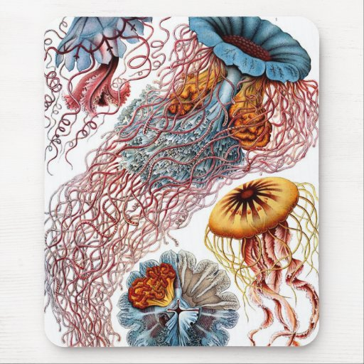 Haeckel Jellyfish Mouse Pads