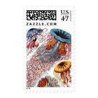 Haeckel Jellyfish Postage Stamp