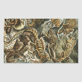Haeckel Lizard Bearded Dragon Iguana Painting Rectangular Sticker