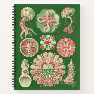 Haeckel Marine Invertebrate Jellyfish Illustration Notebook