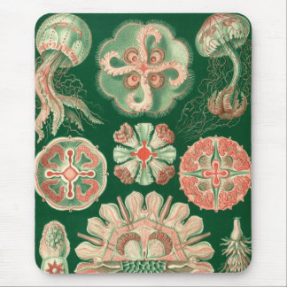 Haeckel Mouse Pad