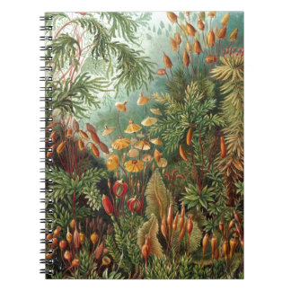 Haeckel Muscinae Notebook