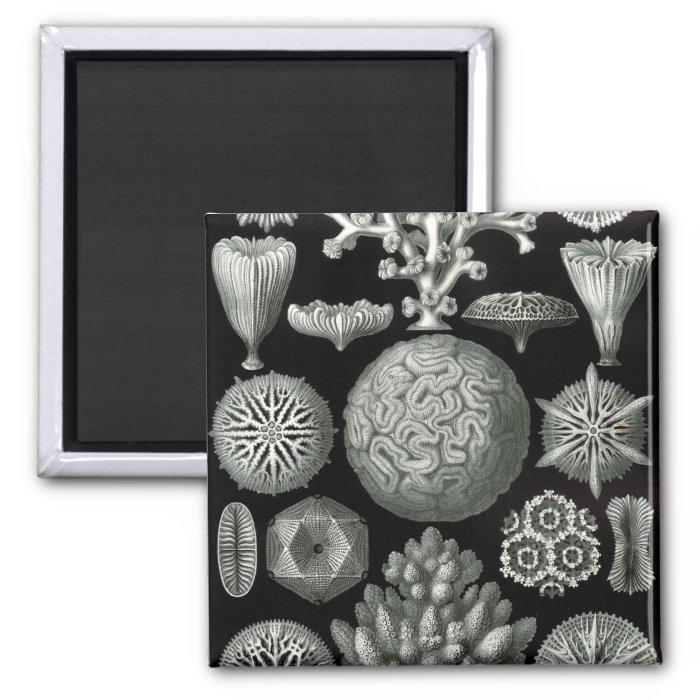 Haeckel Negative 2 Inch Square Magnet