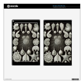 Haeckel Negative Decal For Kindle Fire