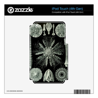 Haeckel Negative Skins For iPod Touch 4G