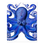 Haeckel Octopus Blue Post Cards