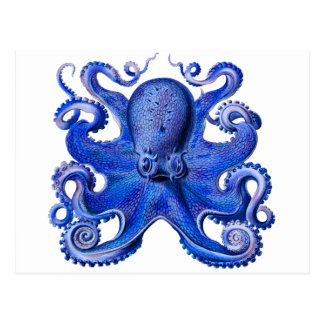 Haeckel Octopus Blue Postcard
