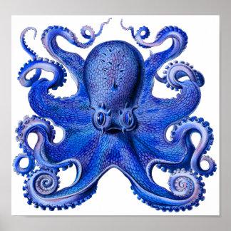 Haeckel Octopus Blue Poster