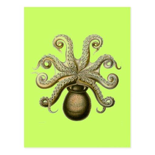 Haeckel Octopus Post Cards