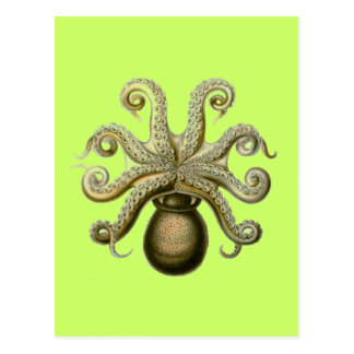 Haeckel Octopus Postcard