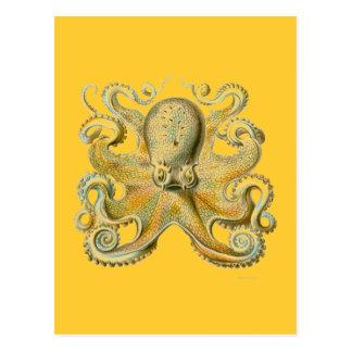 Haeckel Octopus Postcard