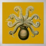 Haeckel Octopus Posters