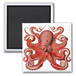 Haeckel Octopus Red Magnet