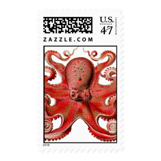Haeckel Octopus Red Postage