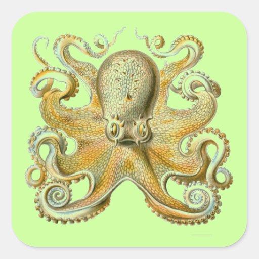 Haeckel Octopus Square Sticker