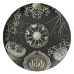 Haeckel Party Plates