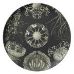 Haeckel Party Plates