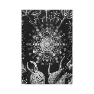 Haeckel Phaeodaria Canvas Prints