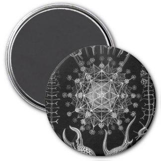 Haeckel Phaeodaria Magnet
