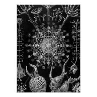 Haeckel Phaeodaria Print