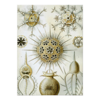 Haeckel Phaeodaria Poster