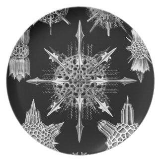 Haeckel Platos De Comidas