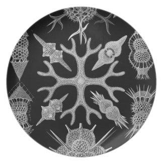 Haeckel Plato De Cena