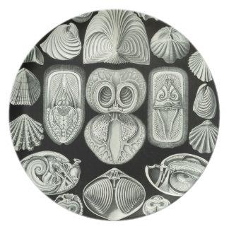 Haeckel Plato