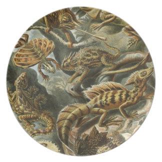 Haeckel Platos Para Fiestas